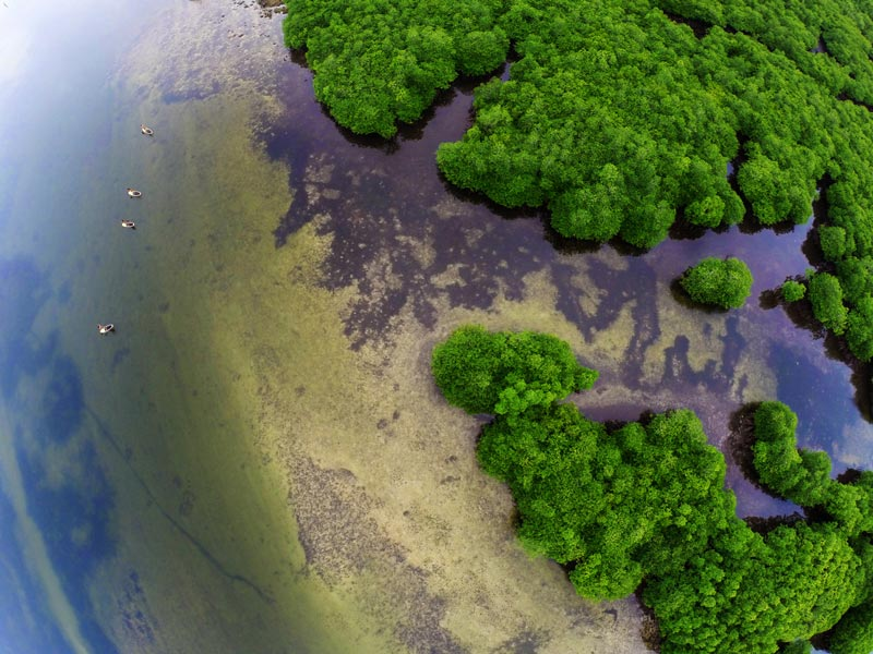 Del Carmen Mangrove Reserve